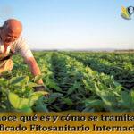 Conoce qué es y cómo se tramita el Certificado Fitosanitario Internacional