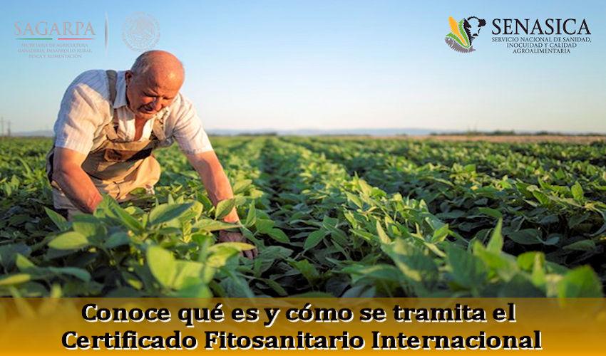 Certificado Fitosanitario Internacional